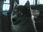 V�deo Metal Gear Solid V: The Phantom Pain Metal Gear Solid V: The Phantom Pain nos permitir� adoptar un lobo que actuar� como un personaje de apoyo.