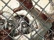 El desarrollo de Overkill's The Walking Dead prosigue