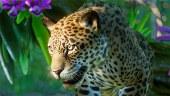 Conoce los contenidos de South America Pack, el segundo DLC de Planet Zoo
