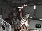 Resident Evil Dead Aim - Pantalla