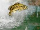 Rapala Pro Bass Fishing - Imagen