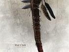Assassin's Creed 3 - Secretos - Imagen